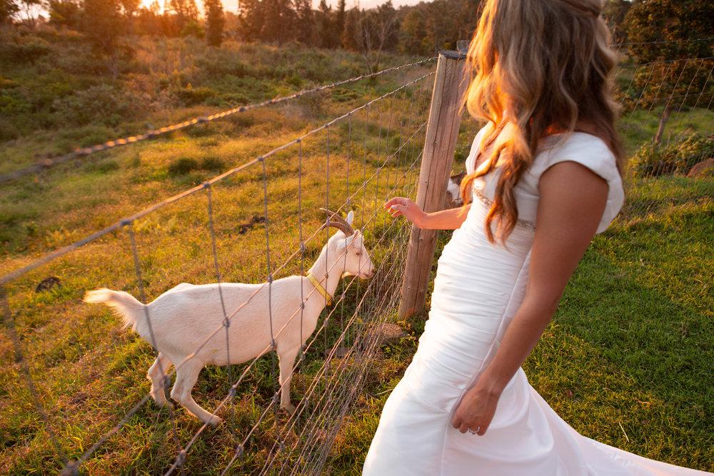 farm wedding venue hawaii