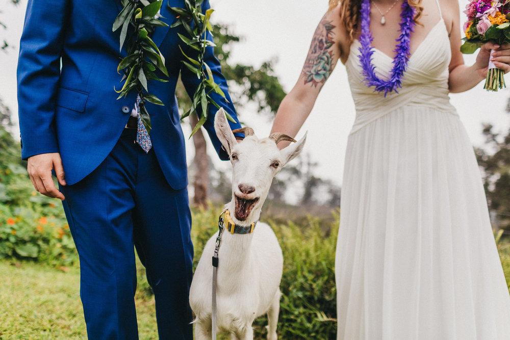 goat wedding photos