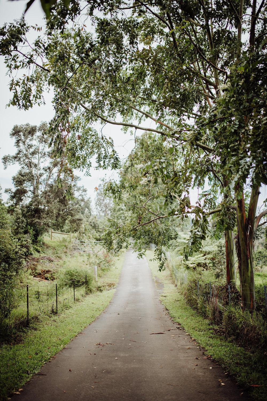 driveway of sunshower farms in kona