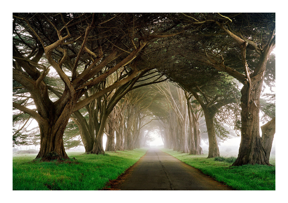 Gothic Wood -