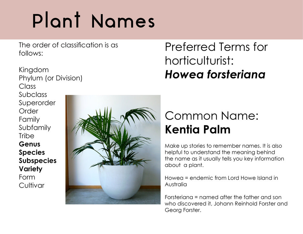 How To Read A Plants Scientific Name Houseplant Hangout