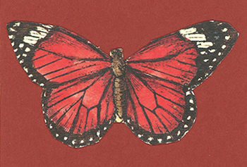 butterflyRed2.jpg