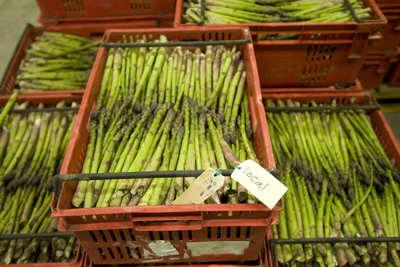 Freshly picked asparagus being processed in Levin at Tendertip Asparagus.