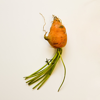 Fuuny shaped fresh carrot with sprouts on in New Zealand.