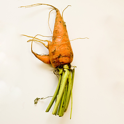 Funny shaped fresh carrot photographed in studio in New Zealand.
