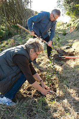 Phyll Pattie and Clive Paton planting a Rata Tree at Crimson Lunch a WOAP Event in Wellington,NZ.