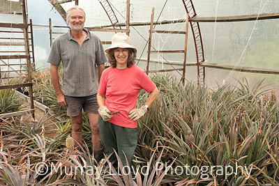 Jan Tagart and Steve Cottis in amongst the pineapple.