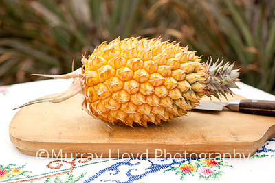 New Zealand pineapple from Northland.