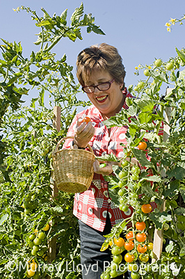 Ruth Pretty picking tomatoes in the garden