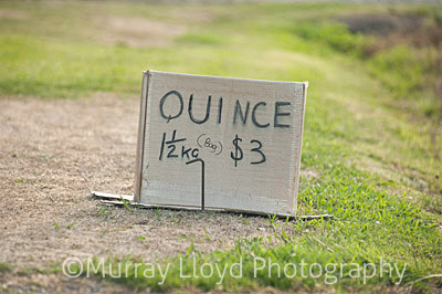 Sign avertising Quince for sale in Hawkes Bay.