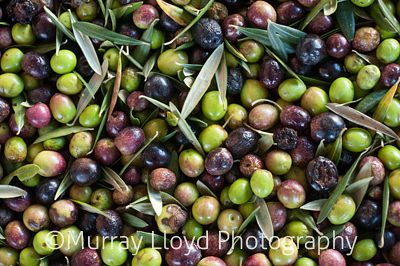 Olives from Village Press