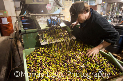 Village Press Olive Oil factory in Hawkes Bay