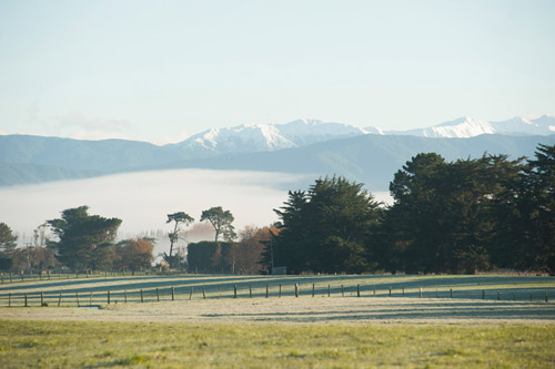 Misty landscape at Martinborough.