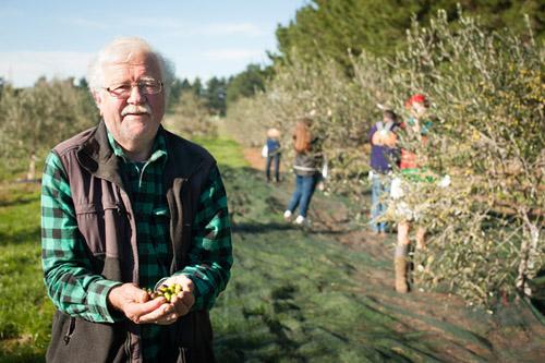 Ray Lilley of Whiterock Olives holding fresh olives.