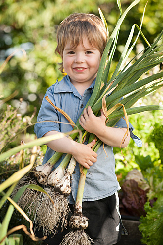 Portrait of smiling boy holding a bunch of fresh garlic in garden.