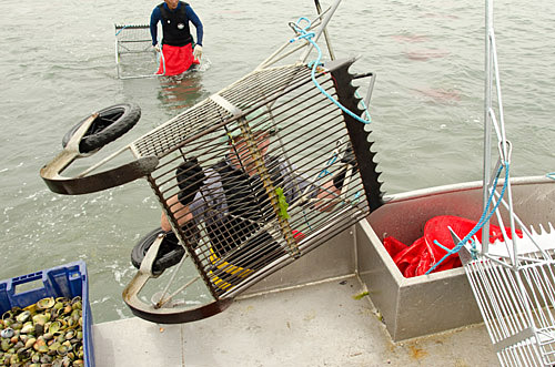 Clam harvester being taken from boat.