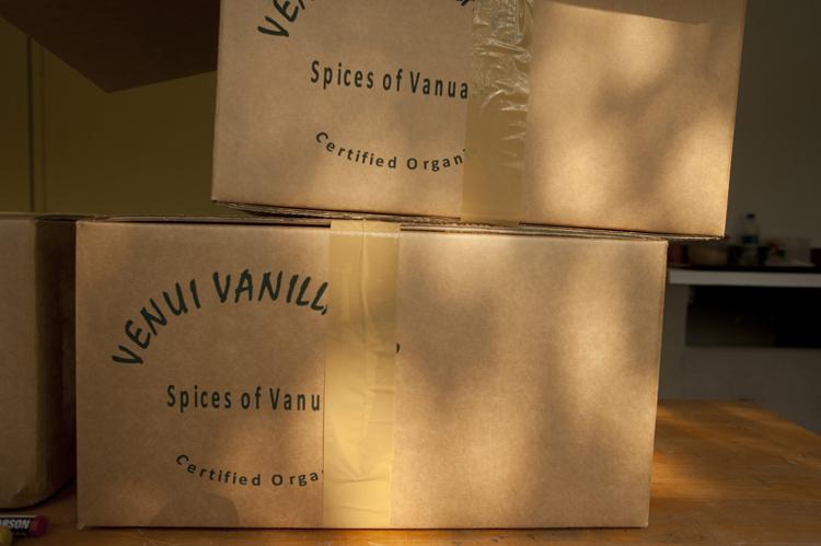 Venui Vanilla05.jpg