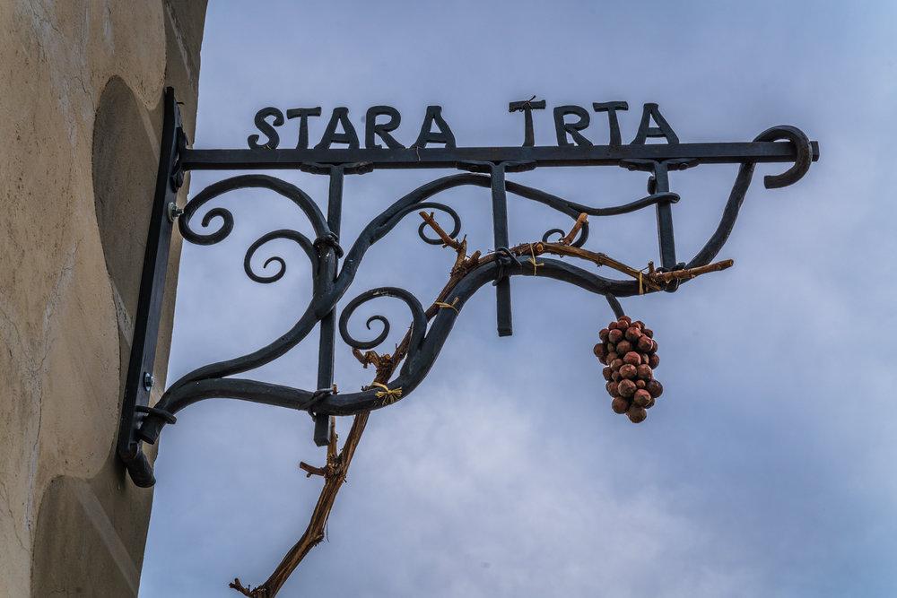16_Stara_trta_5.jpg