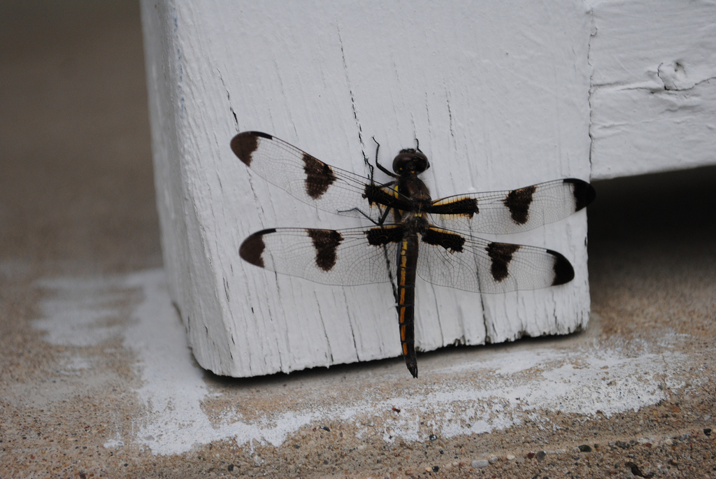 Dragonflies symbolize transformation. If one lands on you, plan for change.