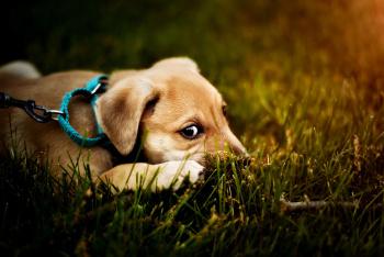 nervous puppy.jpg