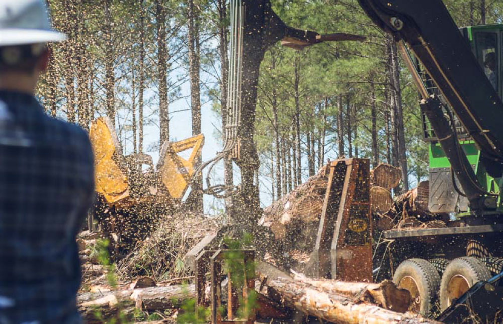 careers in forestry - There are over 40 different career opportunities in the forestry industry. Find out more.