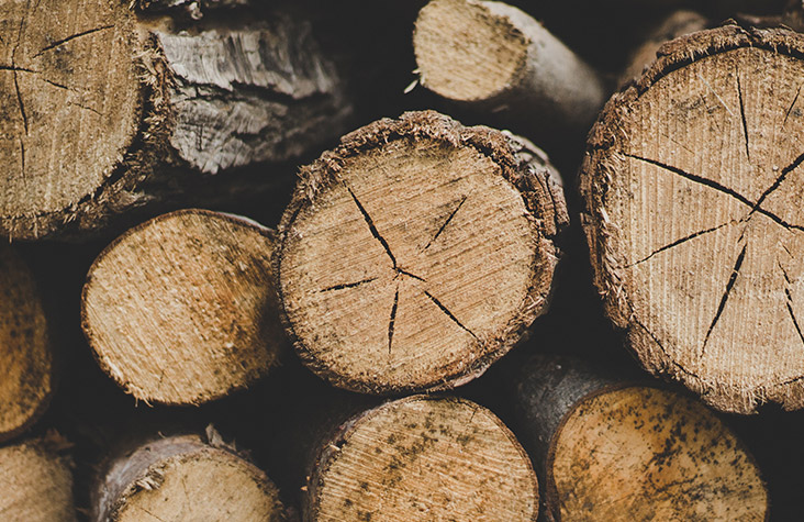 timber buyer - Timber buyers are responsible for procuring timber from private landowners for delivery to local mills.