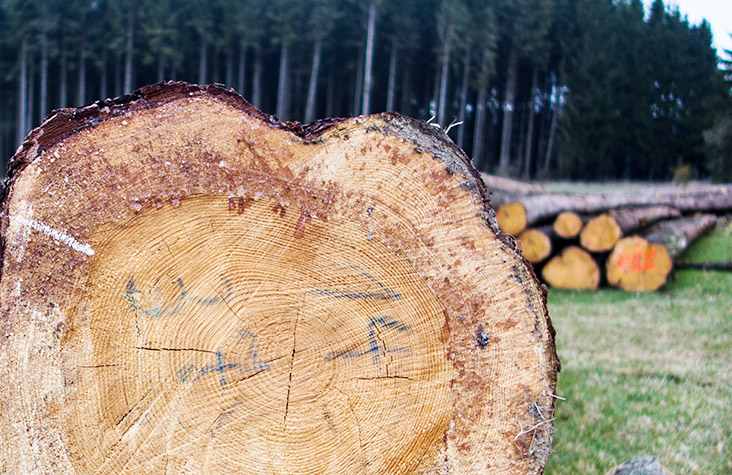 procurement forester - Procurement foresters are responsible for the oversight of the procurement of timber and safe execution of the contracts that conduct harvesting and transport work.