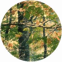 Fall Foliage Circle 3.jpg