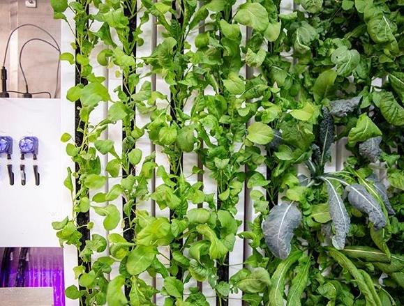 Urban Farming - More than just a hobby