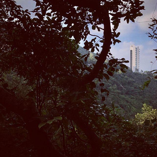 Nature v Nurture #hongkong #hk #cityscape #photographersgallery #portfoliowork #nature #environment