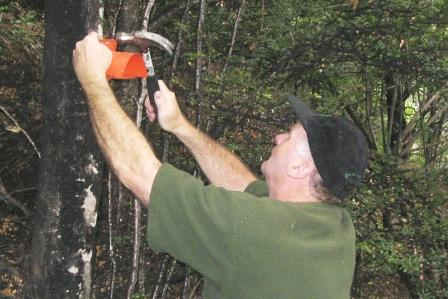 drew-putting-out-wasp-bait-stations.jpg