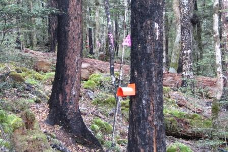 wasp-bait-station-in-forest.jpg