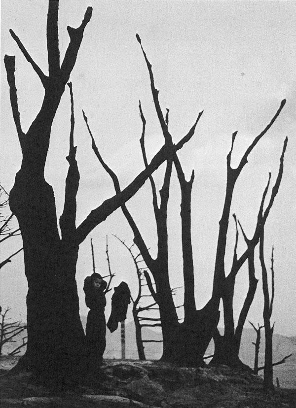 林应植,《裸露的树枝(釜山)》,1953年。图片由首尔摄影博物馆提供。