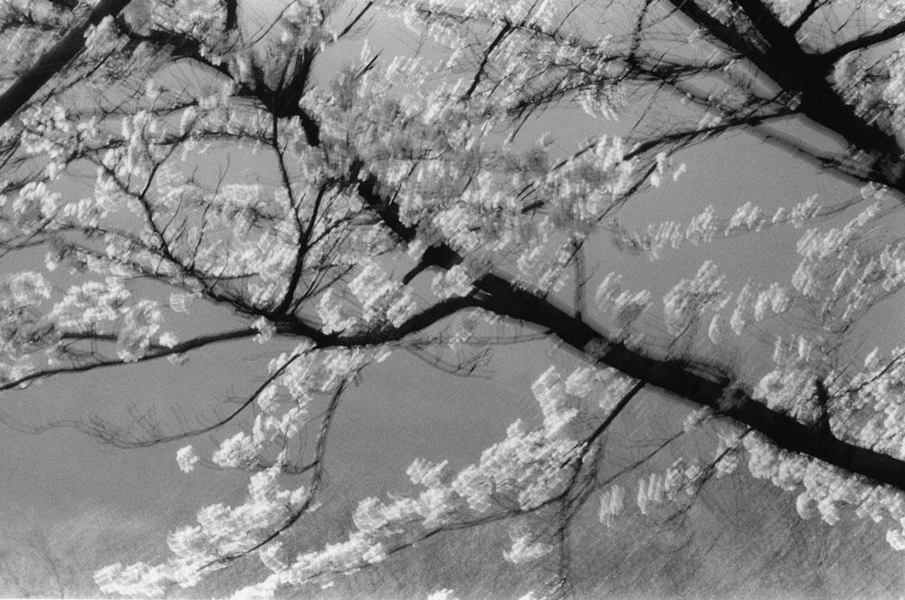李甲哲,《河东》,韩国,2004年。图片由艺术家提供。