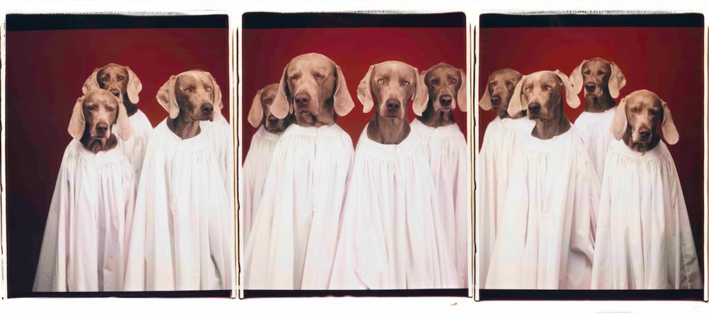 威廉·魏格曼,《合唱团》,2000。图片由艺术家提供