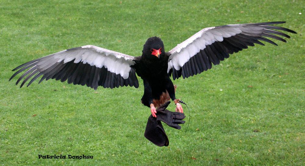 bird with glove.jpg