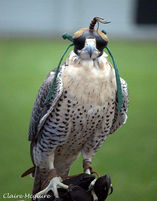 Birds Of Prey..17.jpg