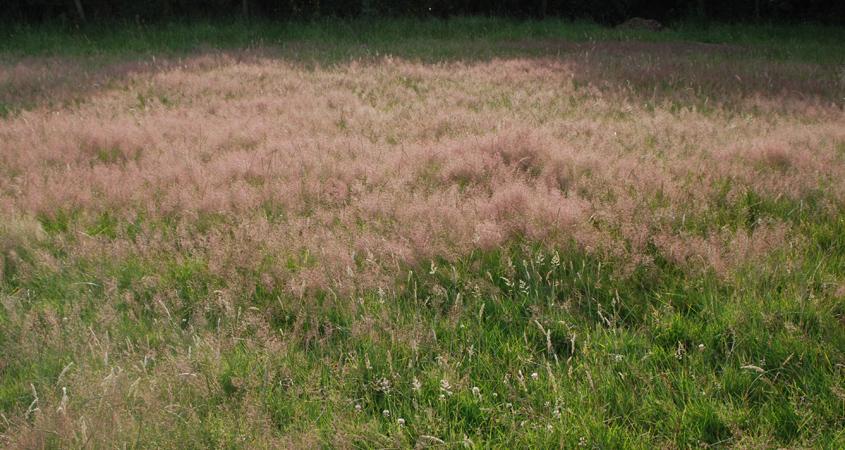 grassland2.jpg