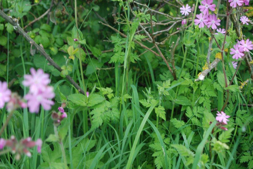 grassland3.jpg