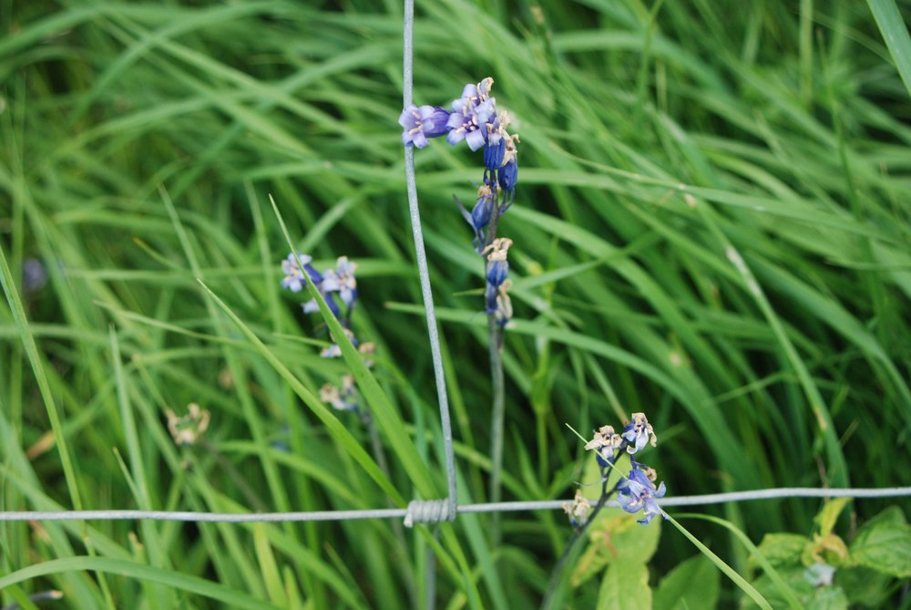 grassland5.jpg