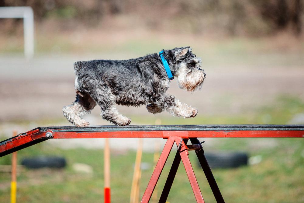 mackay-dog-agility-banner.jpg
