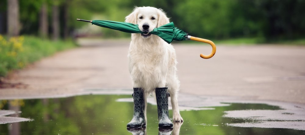 Wet Weather -