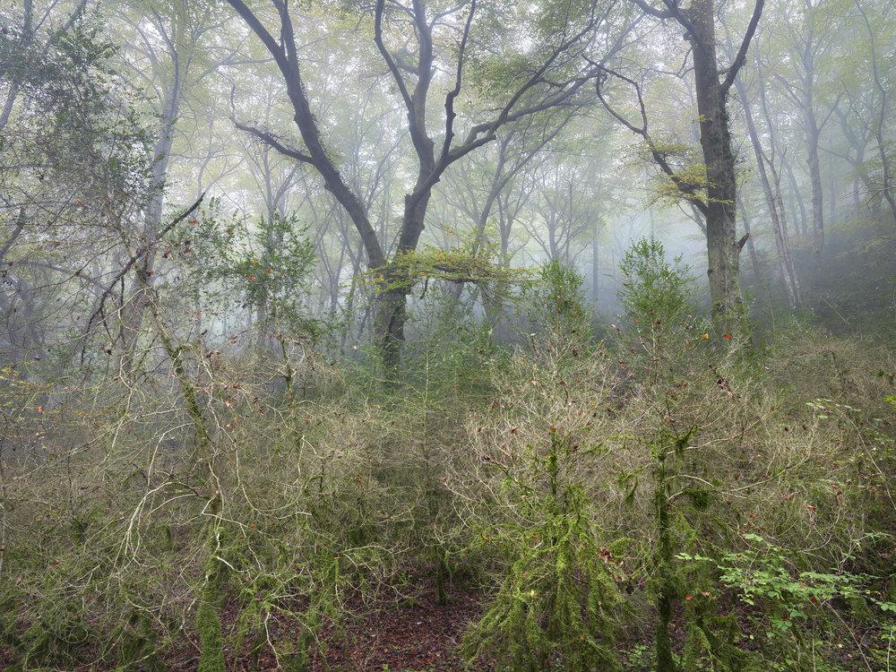 Burgundy Forest, France 2014