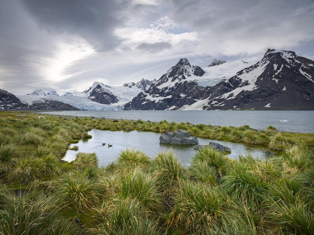 King Håkon Bay, South Georgia, Antarctica 2016