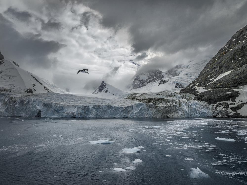 Drygalski Fjord, South Georgia, Antarctica 2016