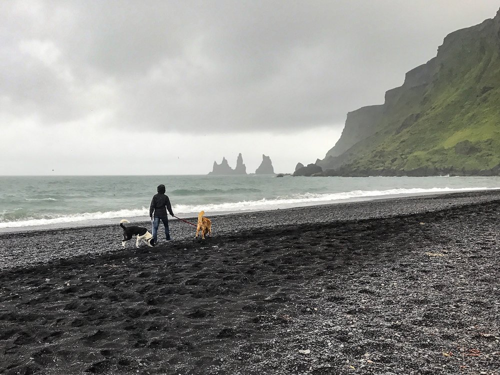 My wife and our two dogs taking a walk on the emptier beach found by driving through Vík