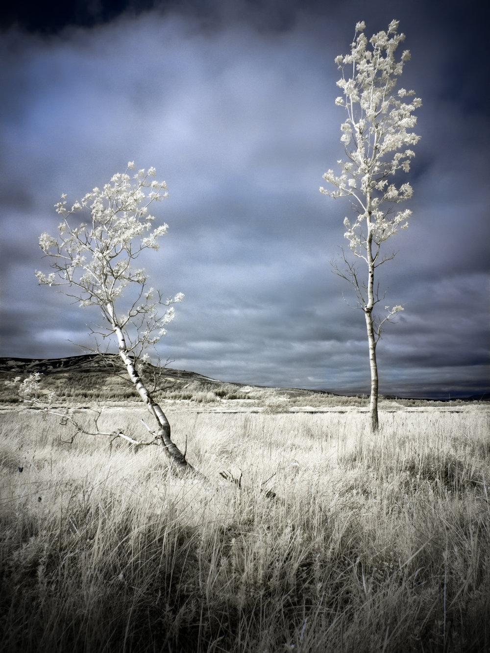 Birch Pair