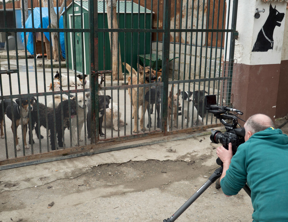 DOGS-AT-GATE.jpg