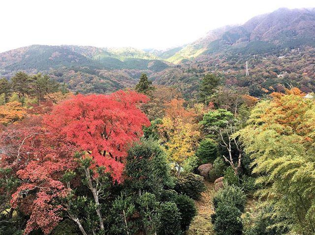 強羅も紅葉の季節が やってきました🍁  Autumn has come in gora.  #guesthouse #hakone #hakoneshrine #gora #gorastation #hakonetozantrain #箱根 #箱根ゲストハウス #秋 #autumn #四季 #強羅駅 #ゲストハウス