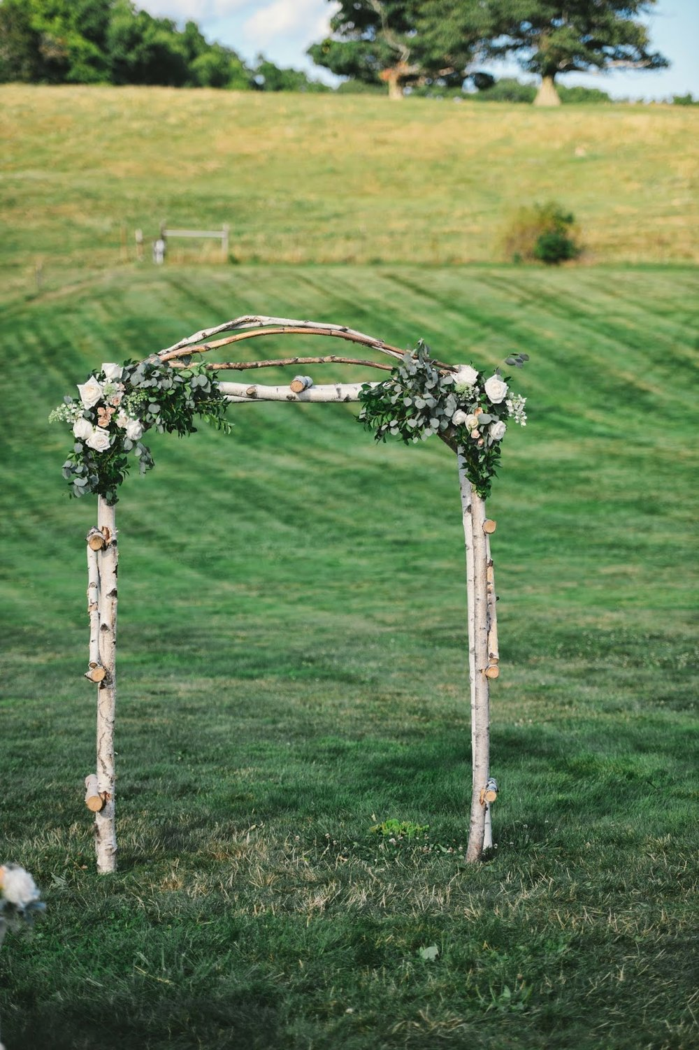 les fleurs : barn at gibbet hill : birch archway : blue green foliage with garden roses